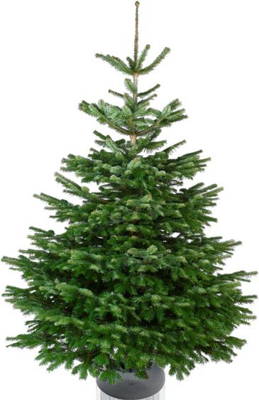 Nordmann Excellent kerstboom